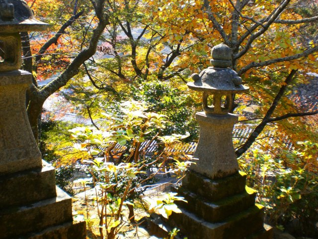 So many pretty leaves in Hasedera