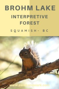 Brohm Lake interpretive forest near Squamish, BC, Canada