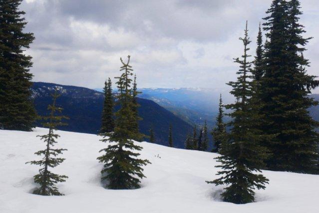 Views near the Windy Joe lookout