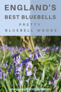 England's best bluebell woods. There are sooo many beautiful bluebell woods to explore and hike around in England. Here are a few of the prettiest for your travels in the UK.