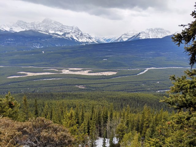 Trees thin to give good Banff views