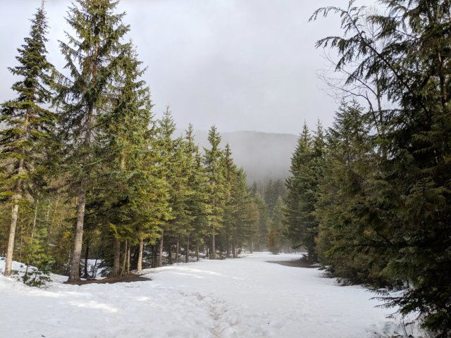 Entrance to Giant the Cedars Boardwalk Trail there was a bit of snow