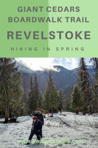 Giant Cedars Boadwalk trail - Revelstoke in the springtime