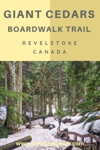 Giant Cedars Boadwalk trail - Visiting gorgeous trees in the Rockies