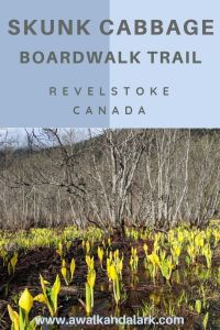 Skunk Cabbage Boardwalk trail - great for birds and flowers