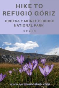 Refugio Góriz - gorgeous wildflowers in Ordesa y Monte Perdido National Park