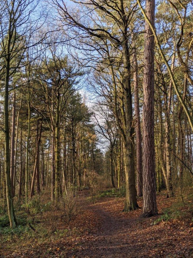 Burntstump Country Park trees