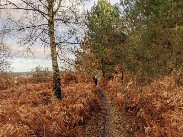Around the edge of the Watchwood plantation