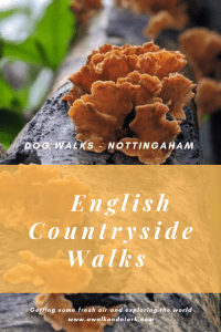 Burntstump Country Park to Woodborough - Dog walks near Nottingham