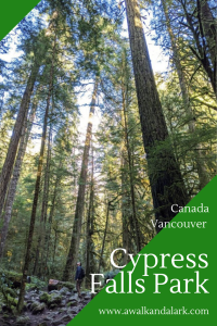 Cypress Falls Park has plenty of stunning old growth trees