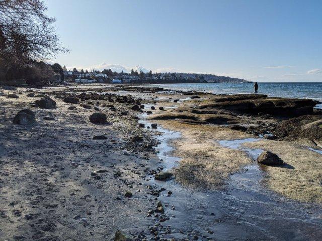 Rocky beach below Point Grey Road