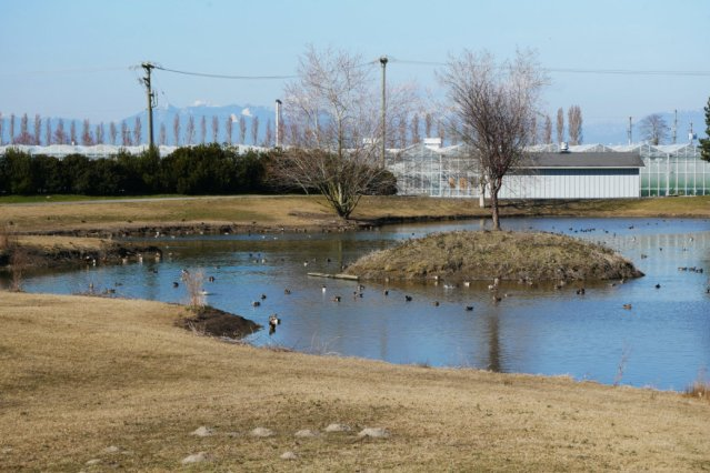 Duck heaven and indoor farms Boundary bay