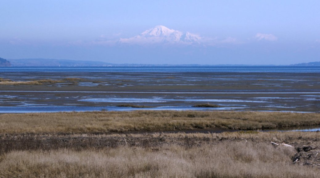 Mount Baker Boundary Bay Dyke Trail