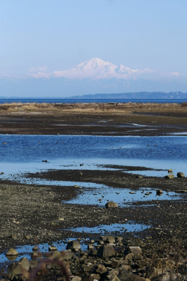 Last view of Mount Baker from Boundary Bay Regional Park