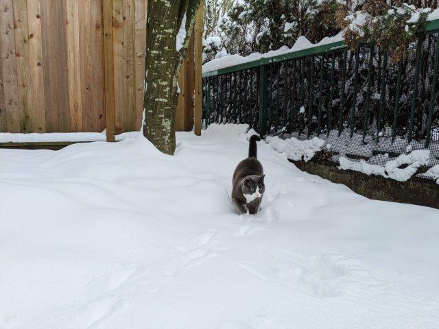 Monty in deeper snow
