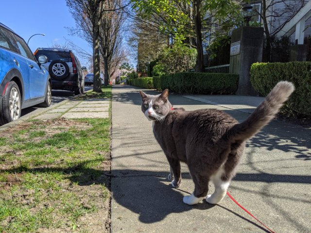 Monty on the streets of Vancouver