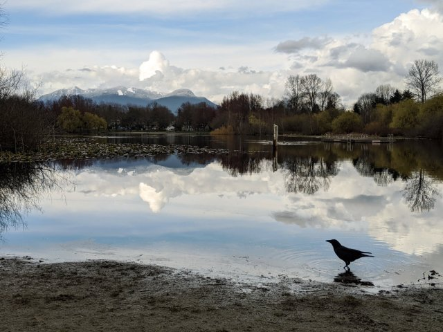 A crow at Trout Lake