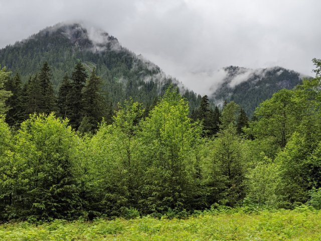 Misty Mountain views