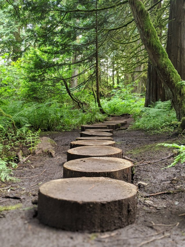 Logs as stepping stones