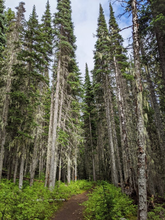 Manning park forest