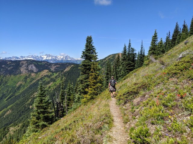 Wildflowers and easy trail