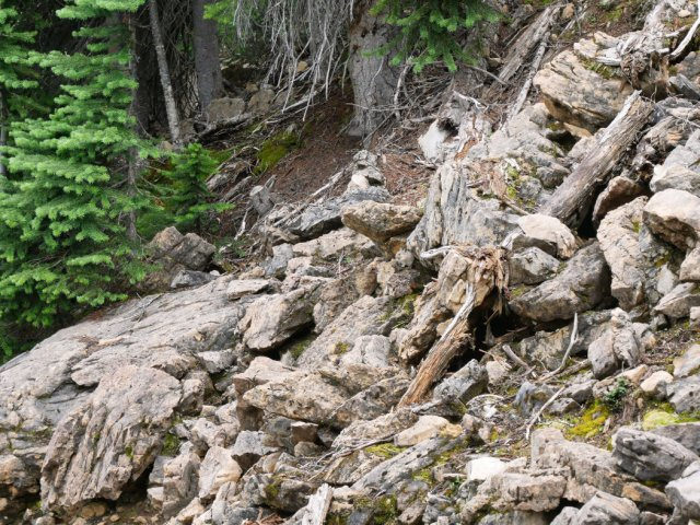 Can you spot the pika