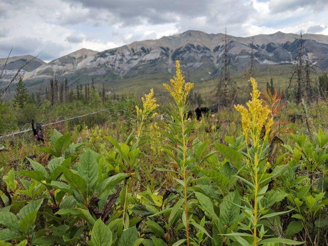 Views of Mount Shanks and Hawk Ridge