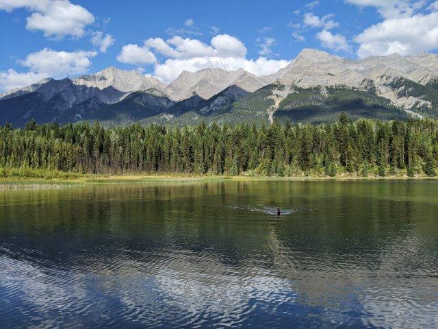 Swimming in Dog Lake