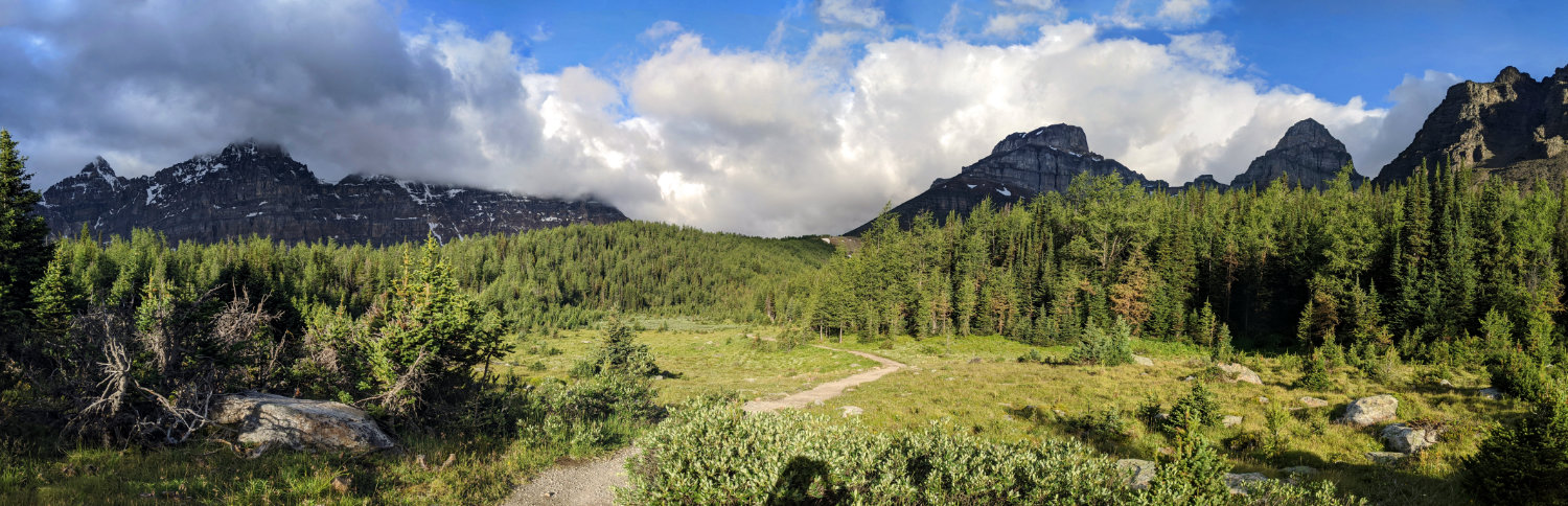 Panorama of Larch Valley trees