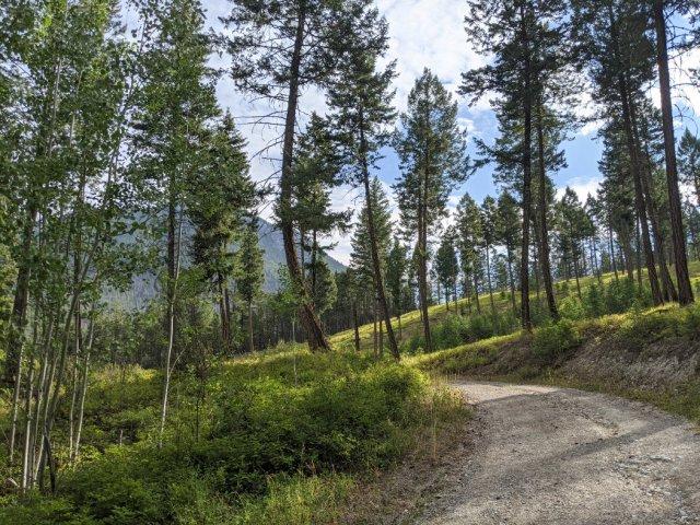 Trees near Redstreak Campground