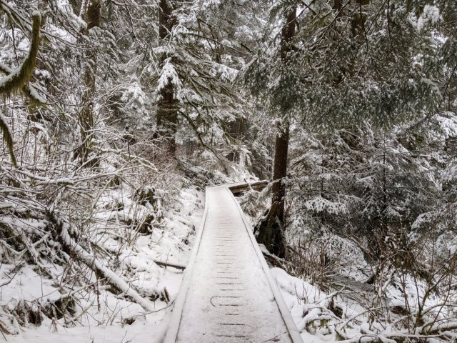 Boardwalks on the way to Norvan Falls in the snow