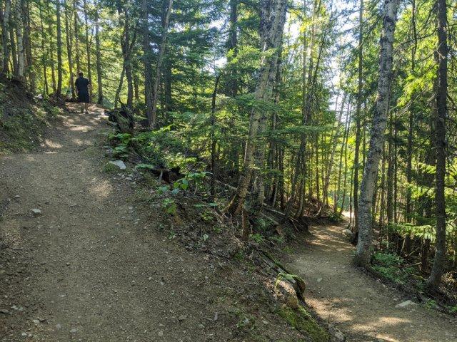 Revelstoke Mountain Resort in the trees