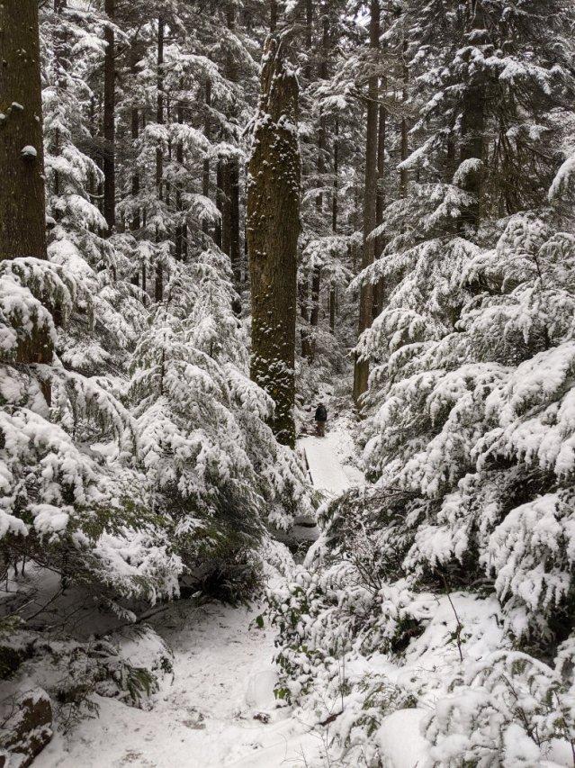 Snowshoe Lynn Loop
