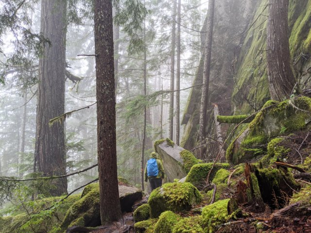 Misty gross weather with gorgeous forest and steep cliffs