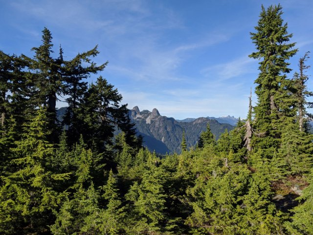 View of the Lions on Hollyburn Peak
