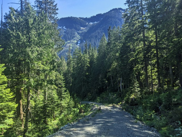 Cross a logging road above Covile Camp