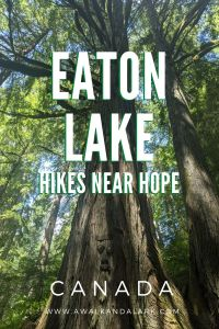 Eaton Lake trail - a challenging hike near hope - watch out for faces in the trees