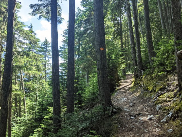 Beautiful forest on Singing Pass trail