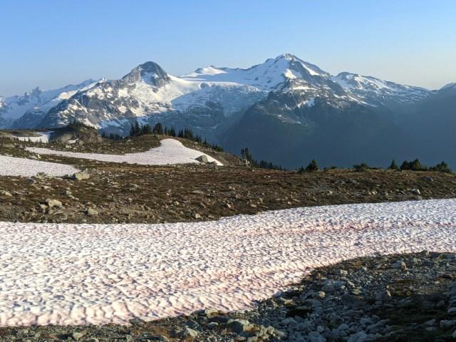 Watermelon snow nearby, Cheakamus glacier in the distance