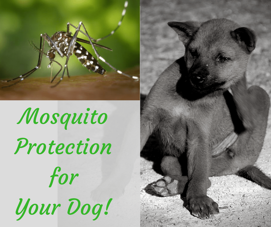 How Can I Protect My Dog From Mosquito Bites