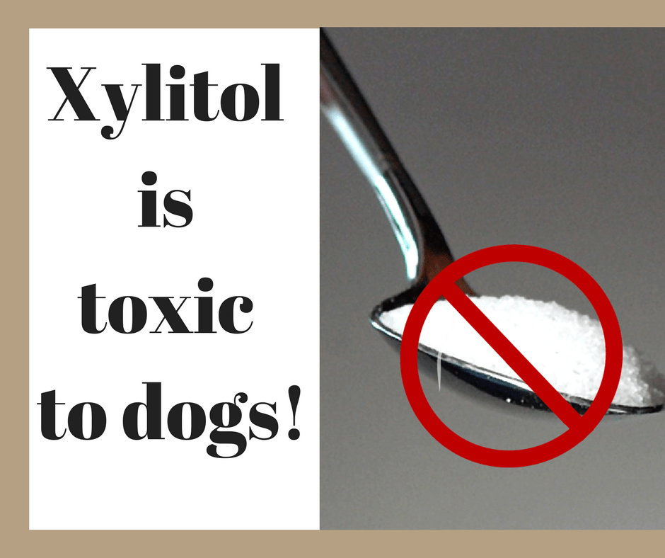 Xylitol is toxic to dogs