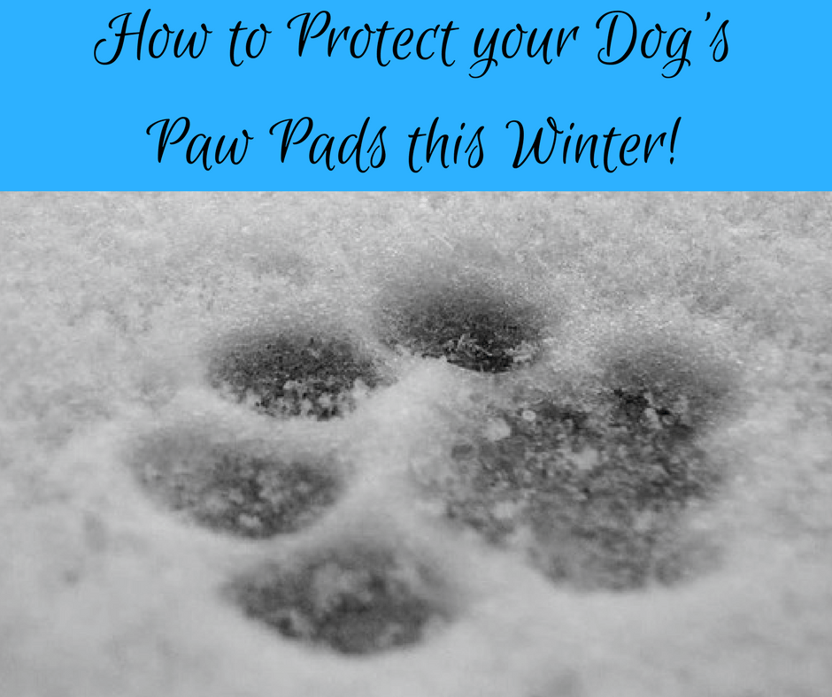 How to protect your dogs paw pads this Winter