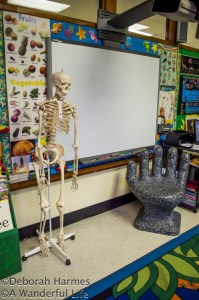 Another section of the science room at Walden School.