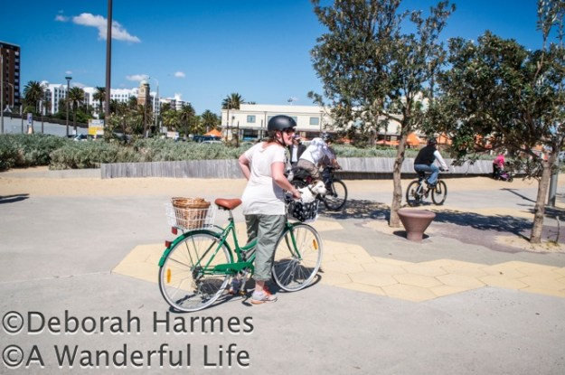 Woman on a bike at St. Kilda beach in Melbourne, Australia with her Jack Russell dog sitting in the front basket