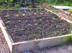 Freshly planted garden bed.