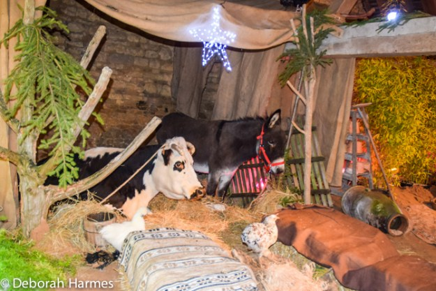 Manger with live animals set up inside the Marche de Noel in the medieval market hall of Saint-Pierre-sur-Dives.