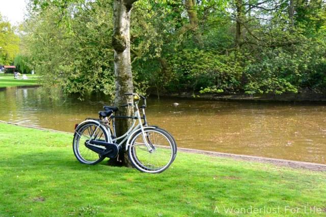 park bike on tree