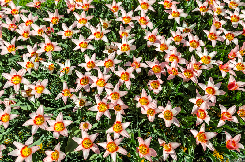 Variety of flowers at Keukenhof