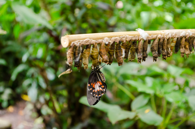 butterfly house in stockholm