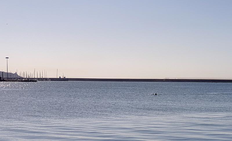 Dolphins in Cagliari